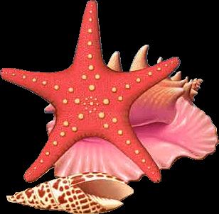 """Résultat de recherche d'images pour """"Gifs mer et coquillages"""""""