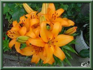 Image du Blog mumuland.centerblog.net