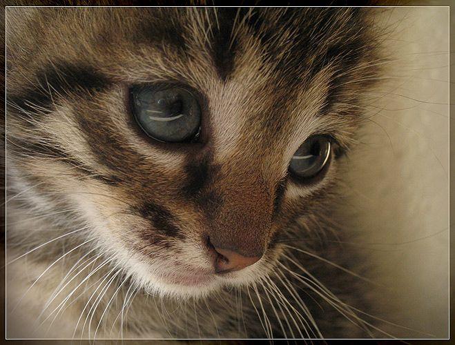 les chats!! - Page 2 5mgp8d83