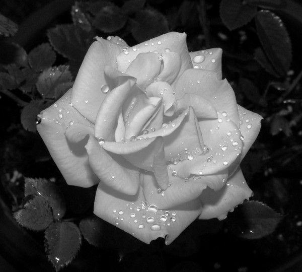 Couleurs noir et blanc page 5 - Noir et blanc couleur ...